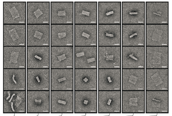 Cylinder-model projections and transmission-electron micrographs for block designs.