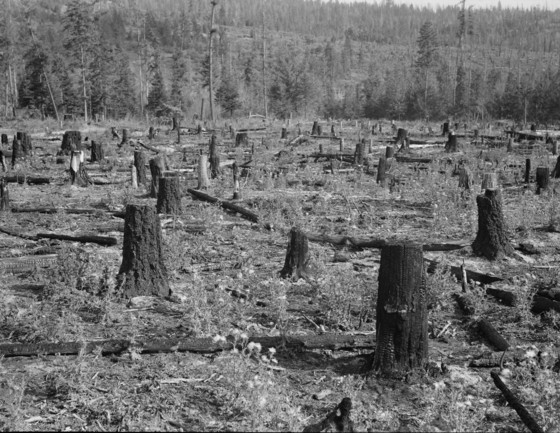 Part of uncleared land on farm, Boundary County, Idaho, 1939.