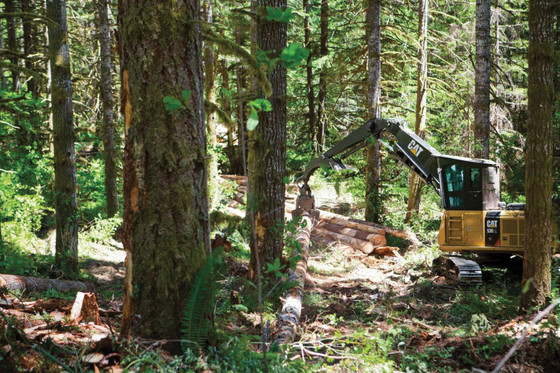 A Cat® Forest Machine removing trees from a forest.